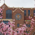 Photo of flowers blooming on campus outside of Doak Campbell Stadium